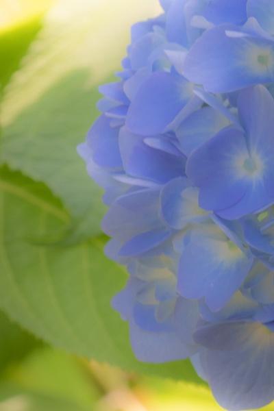 Softness_tash - Flowers - MJ Tash Photography