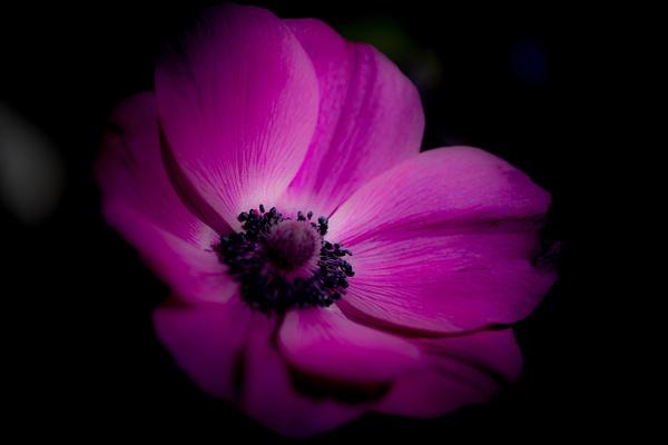 Smith Bulb Show 19 (25).jpg - Flowers - MJ Tash Photography