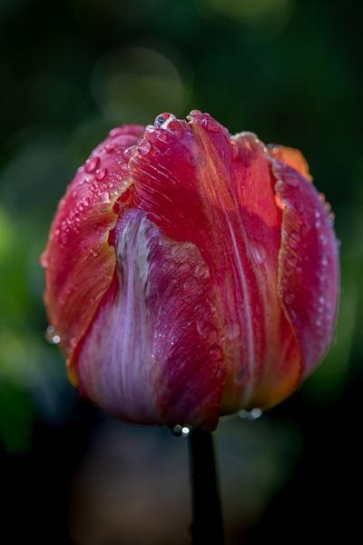 Wet_tash - Flowers - MJ Tash Photography