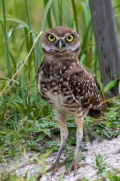 Stop_tash - Wildlife - MJ Tash Photography