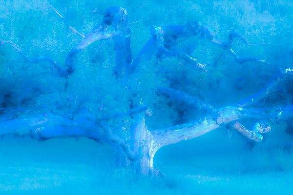 Abstract Blue_tash - Abstract - MJ Tash Photography
