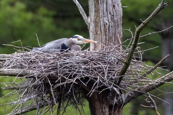 0N8A4731 - Wildlife - MJ Tash Photography