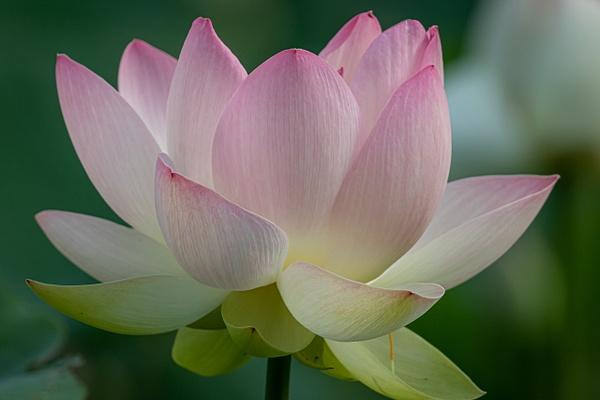 0N8A0633 - Flowers - MJ Tash Photography