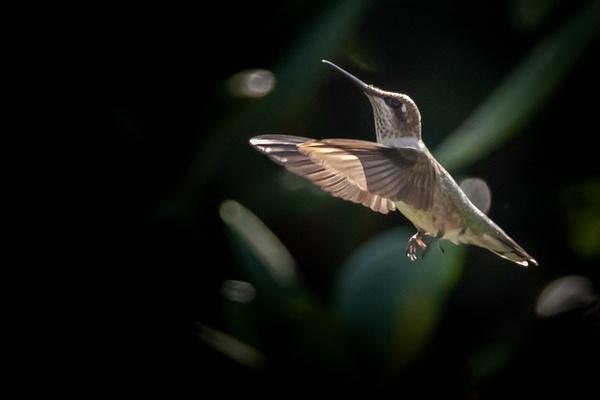 0N8A1760 - Wildlife - MJ Tash Photography