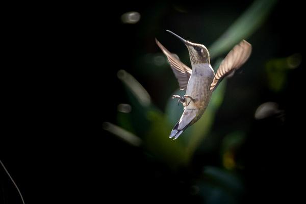 0N8A1759 - Wildlife - MJ Tash Photography
