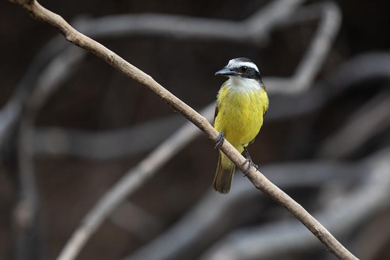 Small birds everywhere