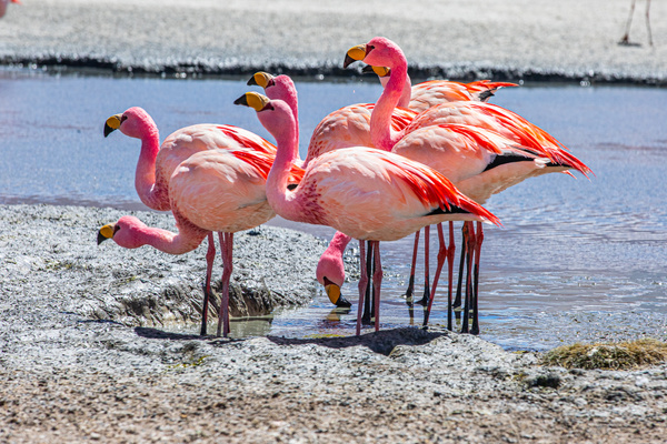 Flamingos at the Laguna Coronado by Michael McNamara