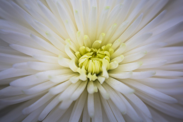Flowers by jaxphotos