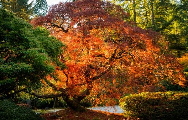 Japanese Gardens-229-Edit - Home - Jax Photos