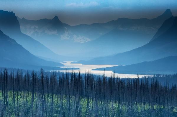 Burnt Patch, Glacier Park by Jack Kleinman