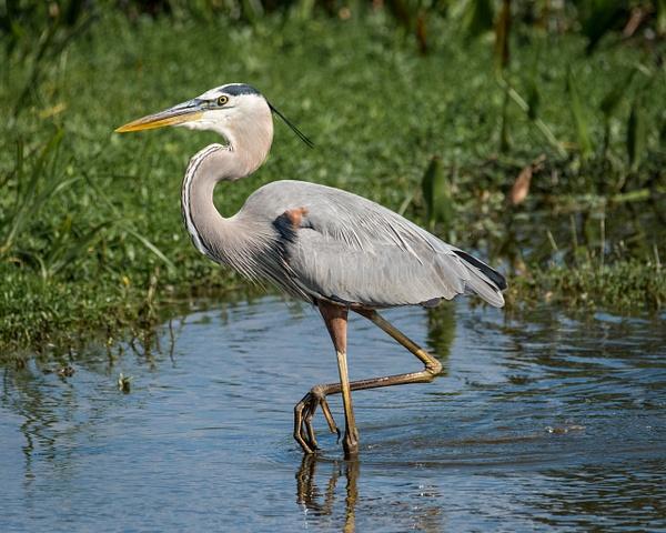 Florida Birds by Jack Kleinman