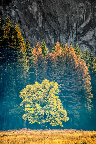 Autumn Foliage, Yosemite