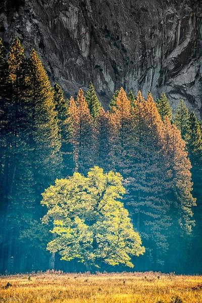 Yosemite-354_Master.jpg - Home - Jack Kleinman Photography