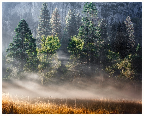 Morning Mist, Cook's Meadow