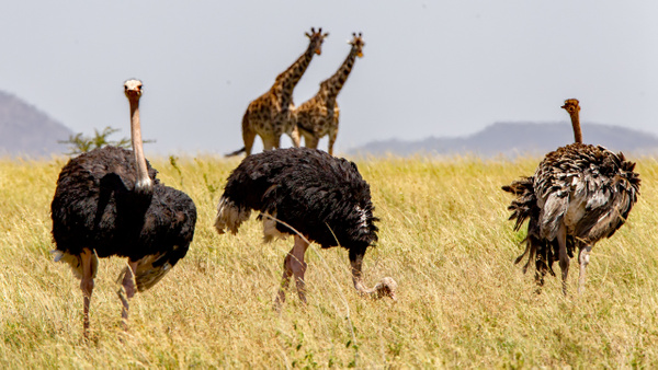 Serengeti N.P. Bilila (2) - TANZANIA - François Scheffen Photography