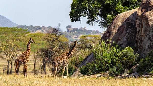 Serengeti N.P. Bilila (1) - TANZANIA - François Scheffen Photography