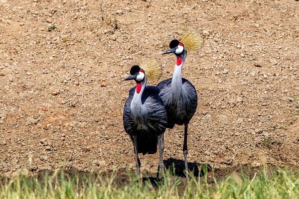 Serengeti N.P. Bilila (7) - TANZANIA - François Scheffen Photography