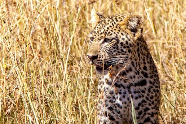 Serengeti N.P. Bilila (9) - TANZANIA - François Scheffen Photography