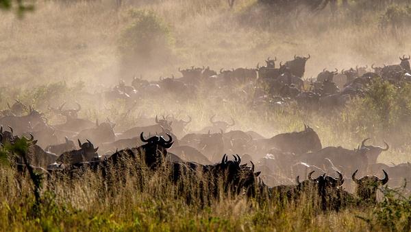 Serengeti N.P. Bilila (13) - TANZANIA - François Scheffen Photography