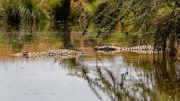 Serengeti N.P. Bilila (15) - TANZANIA - François Scheffen Photography