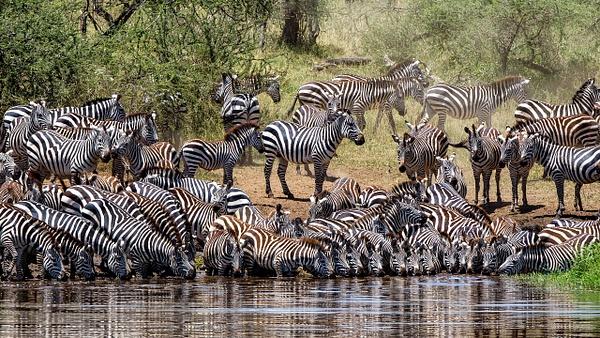 Serengeti N.P. Bilila (16) - TANZANIA - François Scheffen Photography