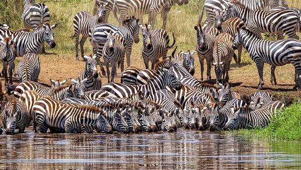 Serengeti N.P. Bilila (17) - TANZANIA - François Scheffen Photography