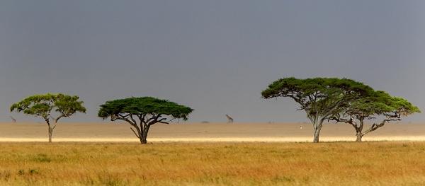 Serengeti N.P. Bilila (20) - TANZANIA - François Scheffen Photography