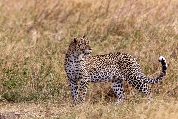 Serengeti N.P. Bilila (21) - TANZANIA - François Scheffen Photography