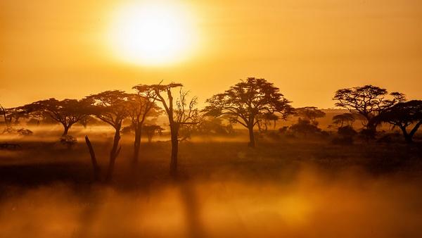 Serengeti N.P. Bilila (27) - TANZANIA - François Scheffen Photography