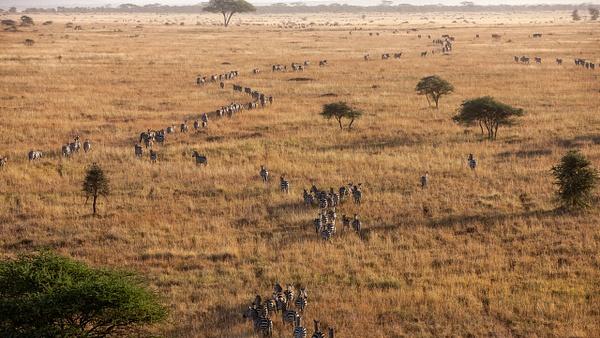 Serengeti N.P. Bilila (31) - TANZANIA - François Scheffen Photography
