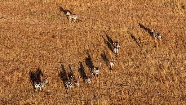 Serengeti N.P. Bilila (30) - TANZANIA - François Scheffen Photography