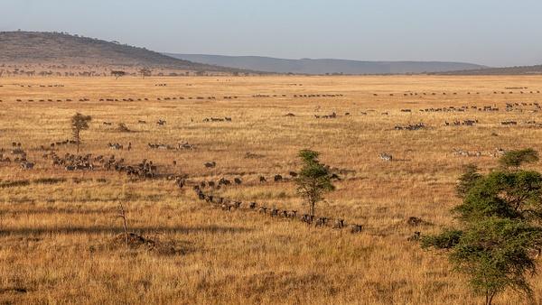 Serengeti N.P. Bilila (32) - TANZANIA - François Scheffen Photography