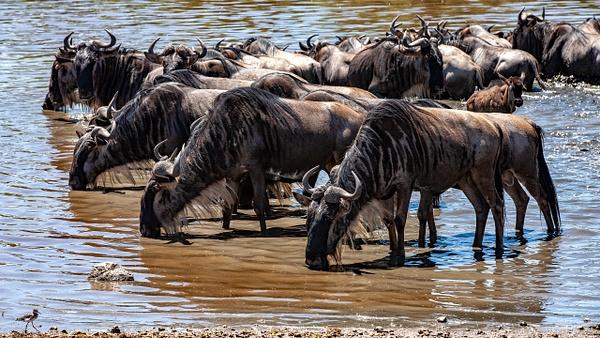 Serengeti N.P. Bilila (34) - TANZANIA - François Scheffen Photography