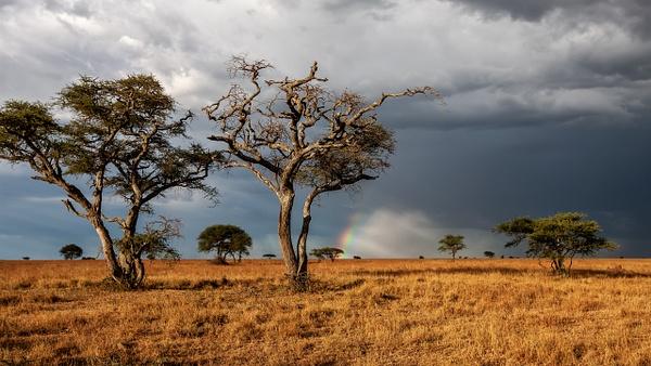 Serengeti N.P. Bilila (36) - TANZANIA - François Scheffen Photography