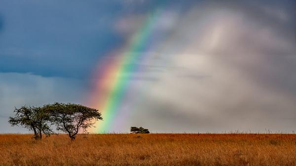 Serengeti N.P. Bilila (38) - TANZANIA - François Scheffen Photography