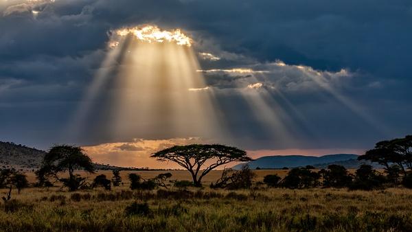 Serengeti N.P. Bilila (39) - TANZANIA - François Scheffen Photography