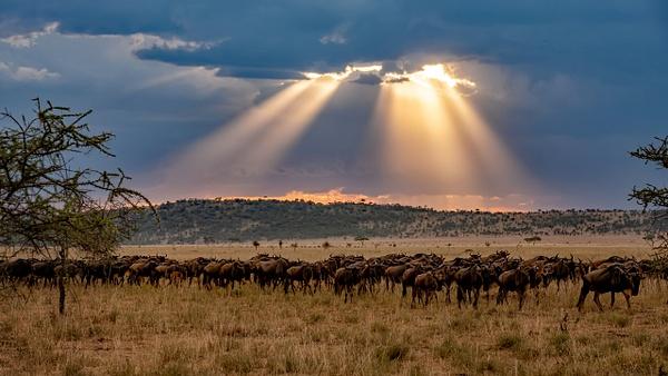Serengeti N.P. Bilila (40) - TANZANIA - François Scheffen Photography