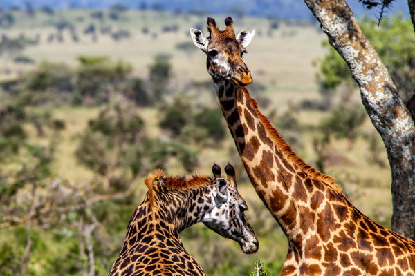 Serengeti N.P. Kusini (7) - TANZANIA - François Scheffen Photography