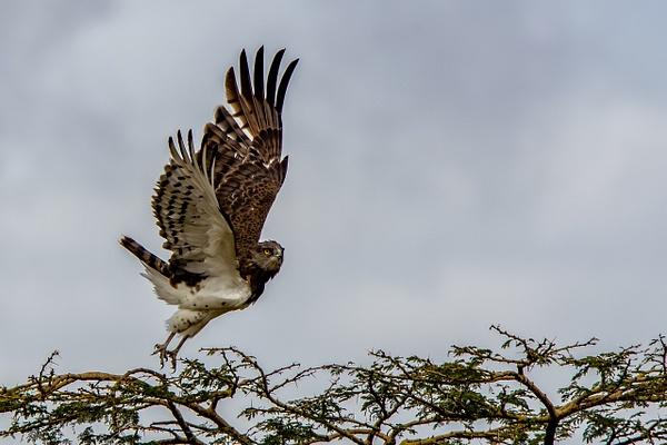 Serengeti N.P. Kusini (1) - TANZANIA - François Scheffen Photography
