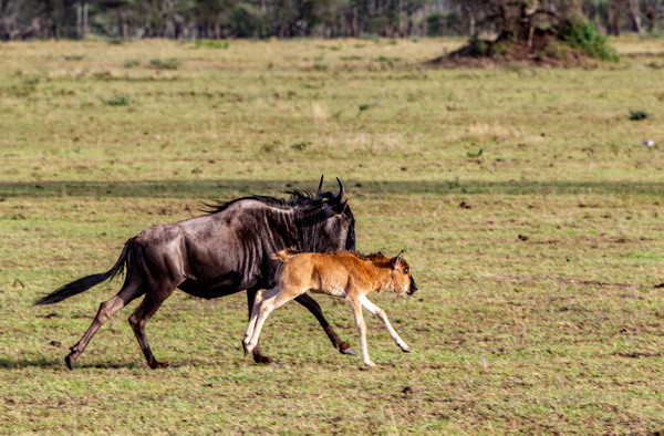 Serengeti N.P. Kusini (5) - TANZANIA - François Scheffen Photography