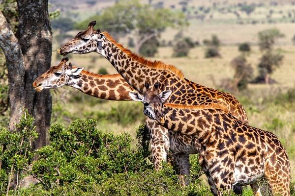 Serengeti N.P. Kusini (6) - TANZANIA - François Scheffen Photography