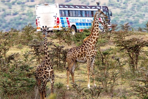 Serengeti N.P. Kusini (2) - TANZANIA - François Scheffen Photography
