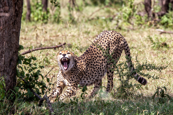 Serengeti N.P. Kusini (11) - TANZANIA - François Scheffen Photography