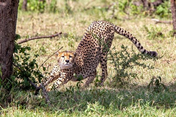 Serengeti N.P. Kusini (10) - TANZANIA - François Scheffen Photography