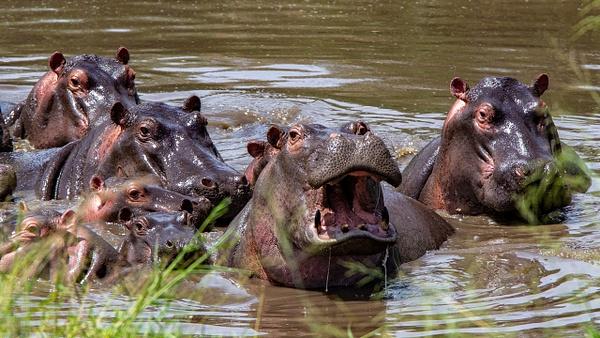 Serengeti N.P. Kusini (13) - TANZANIA - François Scheffen Photography