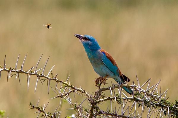 Serengeti N.P. Kusini (14) - TANZANIA - François Scheffen Photography