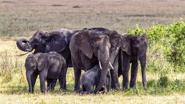 Serengeti N.P. Kusini (15) - TANZANIA - François Scheffen Photography