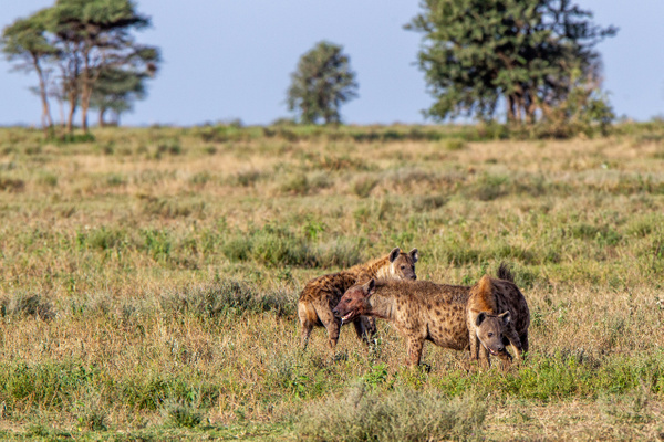 Serengeti N.P. Kusini (17) - TANZANIA - François Scheffen Photography
