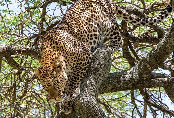Serengeti N.P. Kusini (20) - TANZANIA - François Scheffen Photography