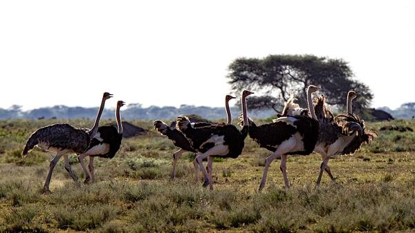 Serengeti N.P. Kusini (24) - TANZANIA - François Scheffen Photography